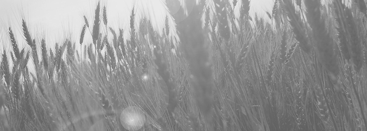 Agribusiness_Hero.jpg